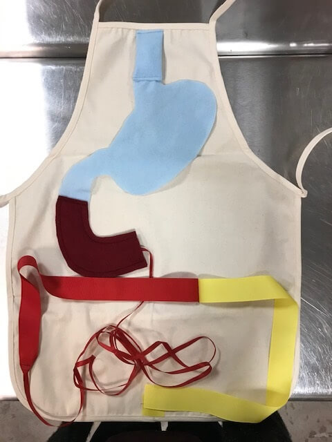 Anatomy apron process